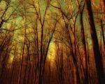 thin-trees.jpg